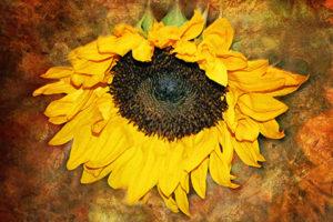 Textured Sunflower by Caren Libby