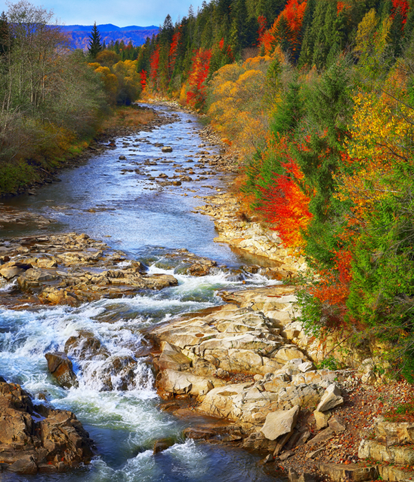 Autumn creek woods with colorfull trees foliage and rocks in forest mountain